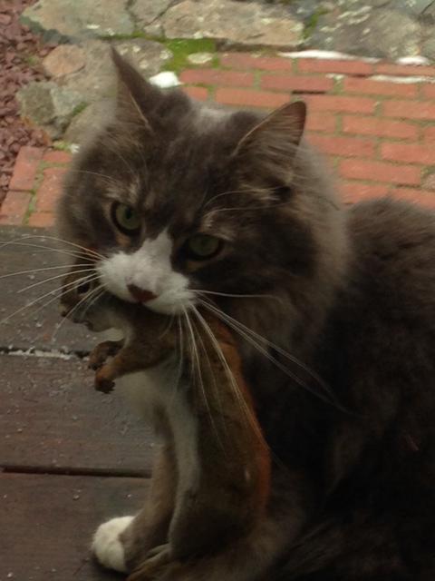 This cat's a killa!!!